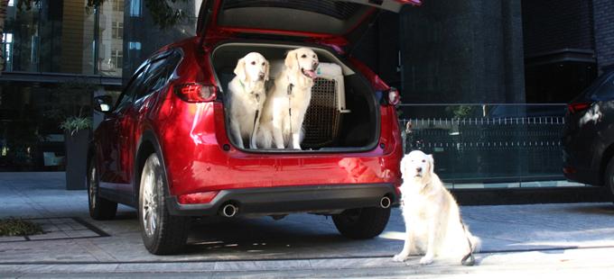 マツダ GVC 愛犬とドライブ
